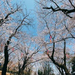 asukayama.jpeg